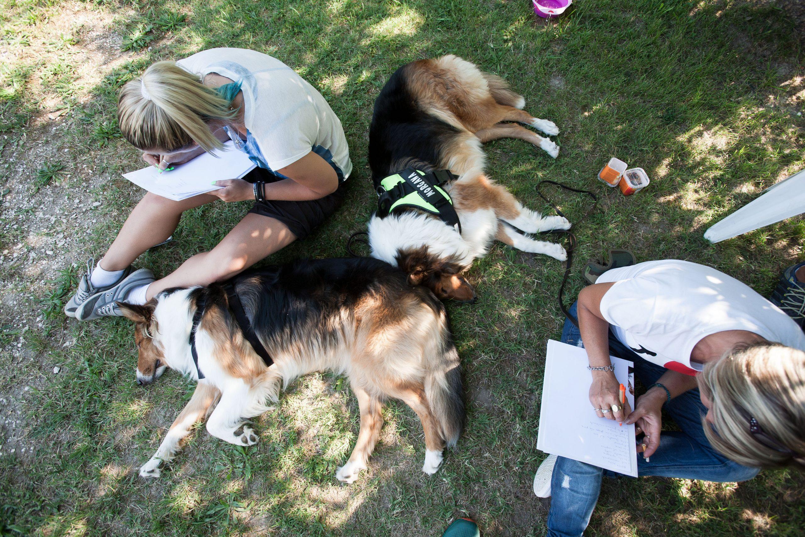 Scuola per cani, corsi di educazione per cani Venezia Mestre