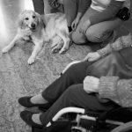 Pet Therapy Venezia Mestre