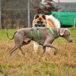 🐶 Corsi socializzazione cani Venezia, Cani per caso